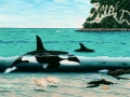orca visit Whangamata nz